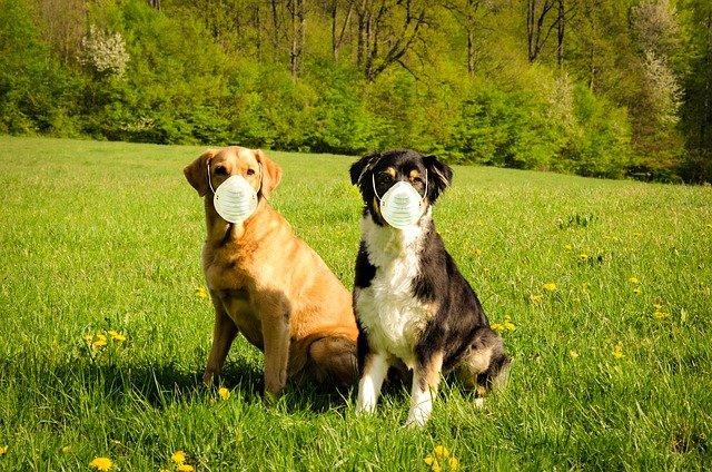 собаки коронавирус
